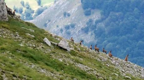 Photo of Grido d'allarme di Legambiente contro le morti della fauna al Parco nazionale d'Abruzzo