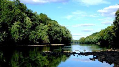 Photo of Giornata mondiale della biodiversità quest'anno in difesa della foresta amazzonica