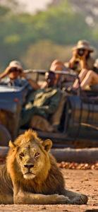 fuoristrada e leone