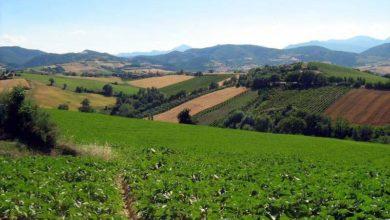 Photo of Imu terreni agricoli montani, vinta la battaglia. Si va verso la proroga a giugno
