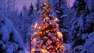 Photo of Il Natale nei Parchi tra presepi, mercatini, ciaspolate e…