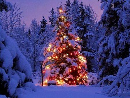 Immagini Di Natale In Montagna.Il Natale Nei Parchi Tra Presepi Mercatini Ciaspolate E