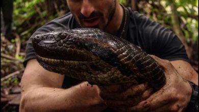 Photo of Paul Rosolie si fa mangiare vivo da un'anaconda… esperimento fallito [video]