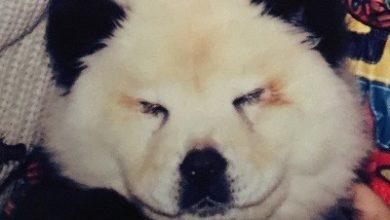 Photo of Cani truccati da Panda al circo, blitz della Forestale