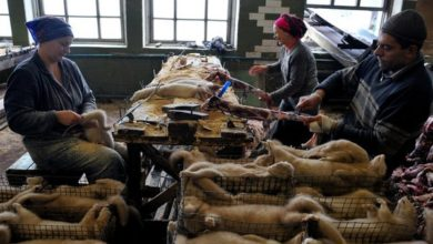 """Photo of """"Faccio fatica a capire come le pellicce siano ancora uno status symbol"""""""