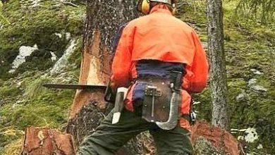 Photo of Gli scivola la motosega, tragedia nei boschi di Cima Sappada nel Bellunese