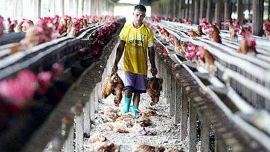 Photo of Allarme Fao: il 70% delle nuove malattie sono di origine animale e connesse al cibo