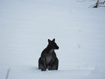 Kangaroo That Hopped It Spotted in Garden