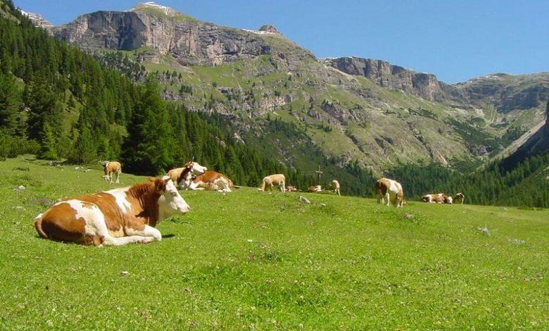 Photo of Vado a vivere in montagna