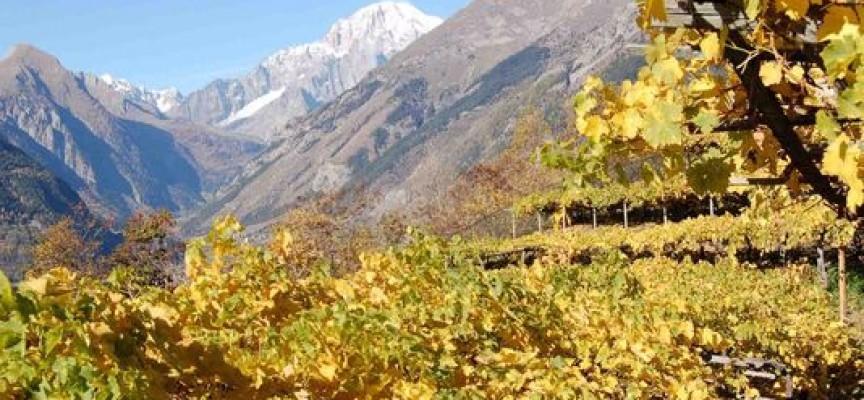 cervim vini montagna
