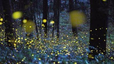 Photo of Con la Forestale nelle Riserve statali per la tutela delle lucciole