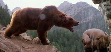Photo of Aggressione orso in Trentino, vertice col ministro per l'Ambiente Galletti