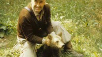 Photo of Morto a 34 anni l'orso Sandrino, simbolo del Parco nazionale d'Abruzzo