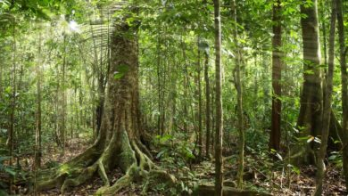 Photo of Respirare la foresta, dove e quando inalare gli oli essenziali naturali