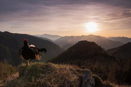 Fotografare il parco, vincitore Denis Bertanzetti