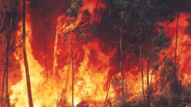 Photo of Pantelleria, incendio contro istituzione Parco