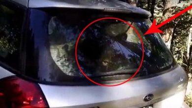 Photo of C'è un orso in auto!… Il video fa il giro del mondo