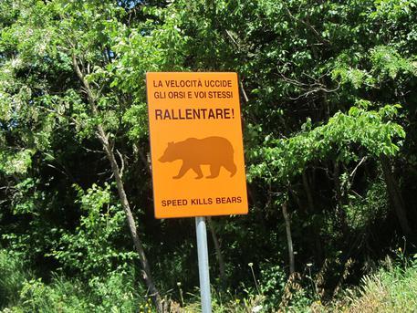 progetto sicurezza stradale Parco nazionale d'Abruzzo Lazio e Molise