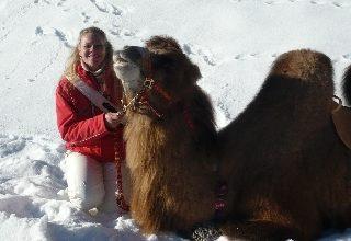 Photo of Escursione sulle Alpi… in groppa al cammello