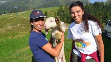 Photo of Giovani volontari, pronti a vivere un'esperienza da pastori?