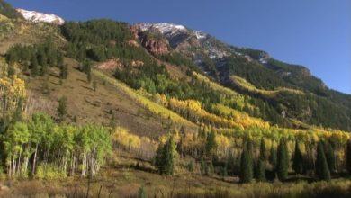 Photo of Allarme in Colorado: morti 834 milioni di alberi