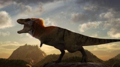 Photo of Sulle montagne d'Abruzzo l'impronta del più grande dinosauro bipede italiano