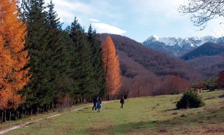 Photo of Faggete del Pnalm, al via iter per primo sito Unesco d'Abruzzo