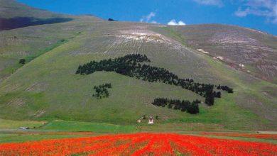 Photo of Ok fioritura a Castelluccio di Norcia tra navetta e riapertura strada