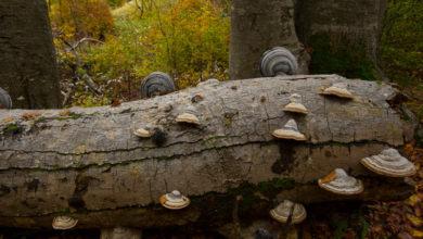 Photo of Parco nazionale d'Abruzzo, le faggete nel patrimonio Unesco