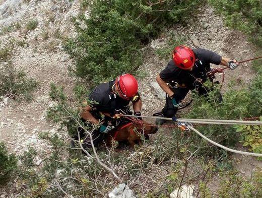 Vigili del Fuoco del nucleo Saf recuperano cane caduto in dirupo a Pennapiedimonte, localit?? Balzolo