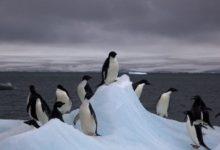 Photo of Antartide, dallo spazio scoperte 11 colonie di pinguini imperatore