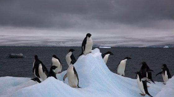 antartide pinguini imperatore