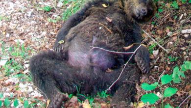 Photo of Orso ucciso in Abruzzo, WWF impugna sentenza di assoluzione