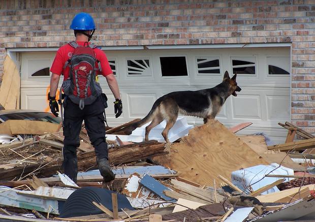 cani soccorso alpino