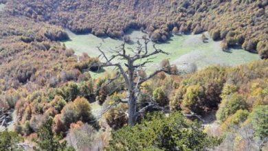 Photo of Gli alberi monumentali d'Italia in un concorso fotografico