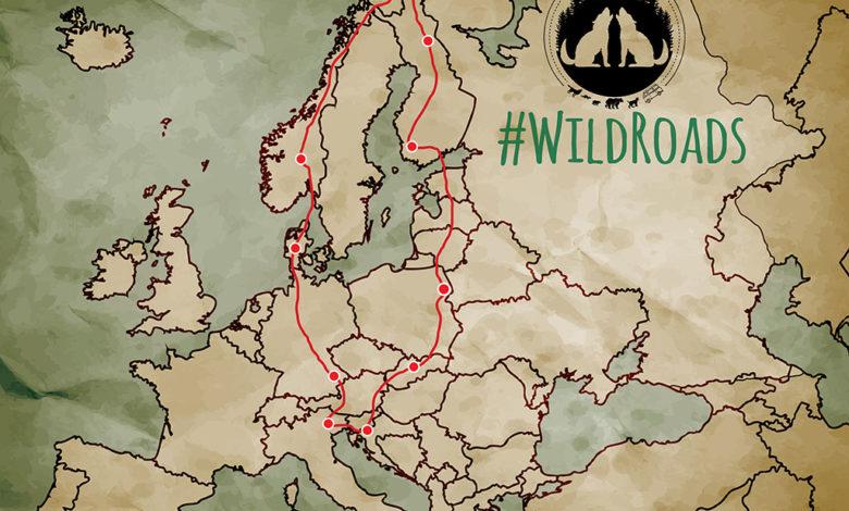 Photo of WWF: viaggio in Europa per dare voce a lupi e orsi