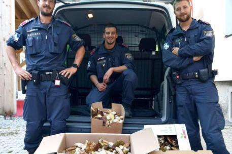 Photo of Italiani beccati con 63 kg di funghi in Austria