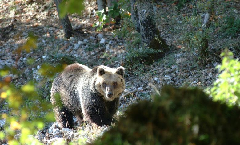 Photo of La strage di Stato di orsi e lupi