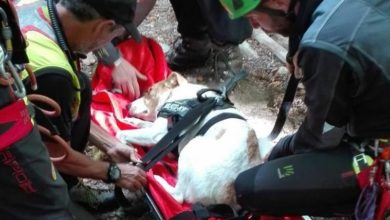 Photo of Soccorso Alpino salva un cagnolino scivolato su un ghiaione