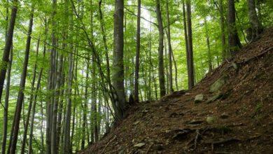 Photo of Si perdono in montagna, salve grazie a numero di telefono inciso su albero