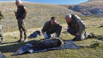 Photo of Orsi morti in Abruzzo, il Cai: Debolezza locale inaccettabile