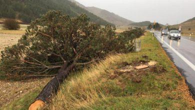 Photo of Roccaraso, WWF: Ora nuovi alberi su altopiano Cinquemiglia
