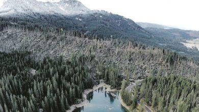 Photo of Tempesta Vaia, oggi saranno ripiantati 500 abeti e larici in Val di Fiemme