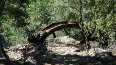 Photo of Appennino meridionale, nasce la rete dei Boschi vetusti