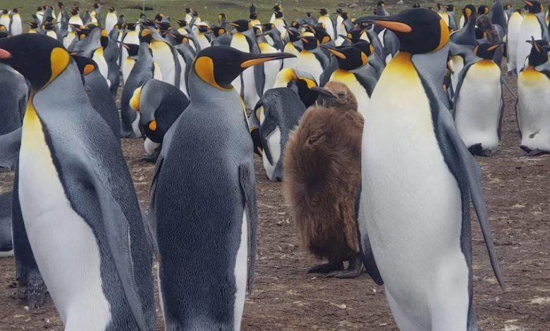 Photo of Txikon in Antartide: Qui è uno spettacolo