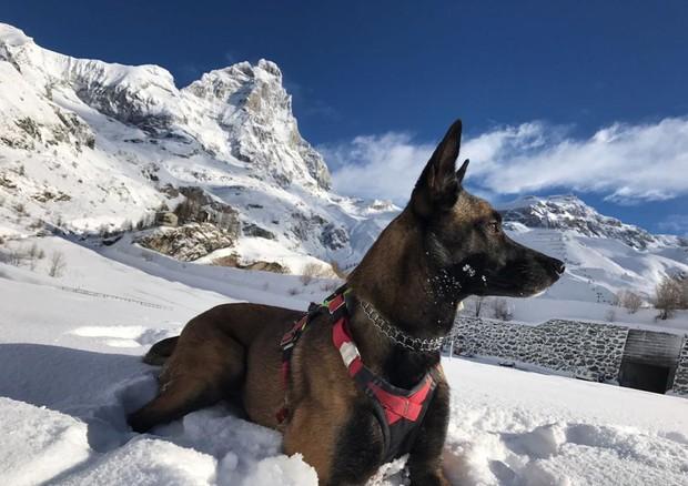 Photo of Malice, cane soccorritore sopravvive 16 giorni su ghiacciaio del Cervino