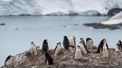 Photo of Antartide, è caldo record: per la prima volta oltre i 20 gradi