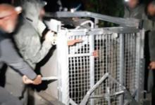 """Photo of """"Rilascio di M49 o procederemo per reato maltrattamenti contro animali"""""""