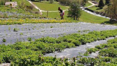 Photo of Le erbe di montagna crescono a ritmo della musica