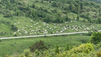 Photo of Pascolo abusivo nel cuore del Parco nazionale d'Abruzzo